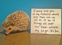 12 Hedgehogs Shamings That Will Make You LOL
