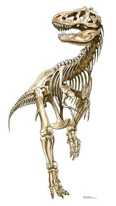 Tyrannosaurus Rex Skeleton Cardboard Standup