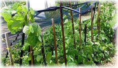 Community gardens produce great organic food produce cheaply