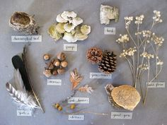 labelled nature table