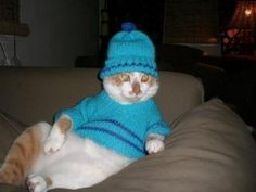 White & Orange cat wearing a blue sweater & hat Cat Sweaters, Blue Sweaters, I Love Cats, Cute Cats, Wooly Jumper, Sweater Hat, Raining Cats And Dogs, Cat Hat, Cat Boarding