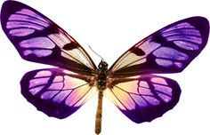papillons,tubes,butterfly,