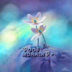 Morning Love, Good Morning Greetings, Good Morning Animation, Good Morning Images Flowers, Sober