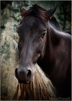 Beautiful dark horse!!