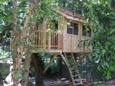Tree House Plans For Two Trees 8' x 12' rectangular treehouse plan | standard treehouse plans