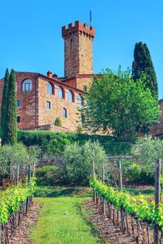 Monument Valley, Vineyard, Nature, Travel, Outdoor, Europe, Italia, Park, Outdoors