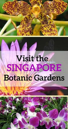 One of the top botanical gardens in the world, the Singapore Botanic Gardens are rated the No. visitor attraction in Singapore. Green thumb or not, you'll love visiting the Singapore Botanic Gardens!