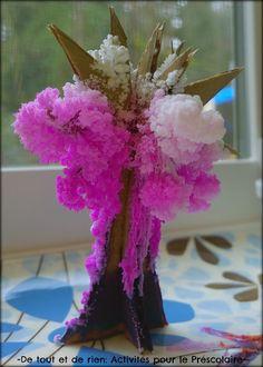 De tout et de rien: Activités pour le Préscolaire: - Faire fleurir un arbre magique en cristaux de sel (cerisier en fleurs)