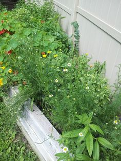 Happiness in the gardens at A Moment in Thyme https://herballyspeaking.wordpress.com/