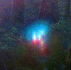Forest faerie folk.