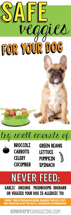 Small amounts of veggies can be a healthy treat for your dog. Consult with a trusted veterinarian or vet tech prior to changing your dog's diet. Get a custom pin like this for your veterinary practice at www.snoutconsulting.com #pethealth #frenchbulldog