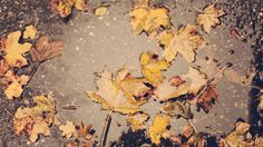 Last signs of fall