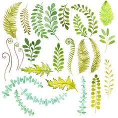 Watercolor Foliage Clipart: Instant download by TanglesTreasures