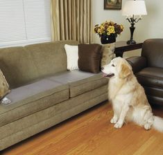 PetSafe ScatMat Indoor Pet Training Mat for Dogs and Cats , Sofa Size, 12 X 60 inch, Pet Proof Your Home, Electronic Training Mat sitting dog|dog grooming|dog pet care|dog minding services|petwatch|dog breeds|dog bite|dog days|dog information|puppy dog|info dog|dog illnesses|Dog health|puppy dog|dog toys for big dogs|dog toys for big dogs|dog toys walmart|dog toys aggressive chewers|dog toys and accessories|outdoor dog toys