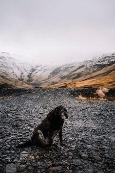 Dog in iceland by AnastasiaBelousova #animals #animal #pet #pets #animales #animallovers #photooftheday #amazing #picoftheday