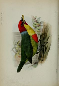 1878:Jan.-Apr. - Proceedings of the Zoological Society of London. - Biodiversity Heritage Library