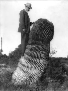 """squishsquabble: """" Just in case you were wondering what my whole avatar image looks like, here it is. Charles Reid Barnes standing on a CACTUS! The picture was take by Dr. Old Photos, Vintage Photos, Cacti And Succulents, Portrait Photo, Botany, Just In Case, Natural, Weird, Black And White"""