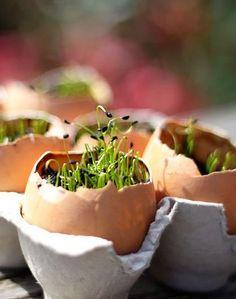 Bij pasen horen eieren.