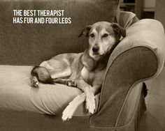 """The best therapist has fur and four legs"""
