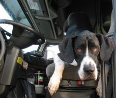 Trucking With Pets - Dog and Cat Pictures CDL Life