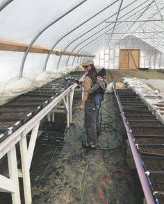 #babyonback watering seedlings edition.