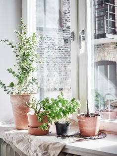 Bright apartment with a touch of Spring via Krone Kern Plants On Window Sill, Window Sill Decor, Interior Design Images, Scandinavian Interior Design, Scandinavian Apartment, Scandinavian Style, Bright Apartment, Interior Plants, Blog Deco