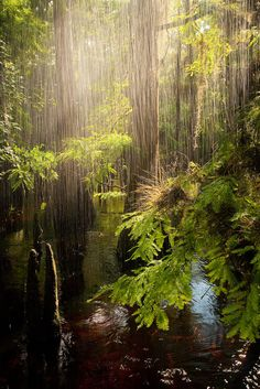 SunShower Fisheating Creek  © copyright by Paul Marcellini.