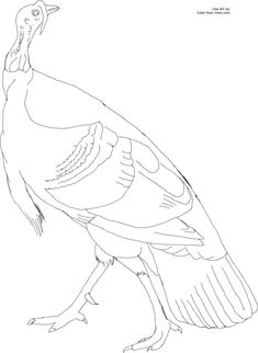 American Wild Turkey Coloring Page