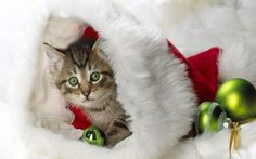 christmas wallpaper for android Christmas Apps, Merry Christmas Friends, Christmas Hat, Christmas Animals, Christmas Humor, Christmas Wallpaper Android, Cat And Dog Videos, Christmas Kitten, Cute Cups