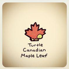 Turtle Canadian maple leaf