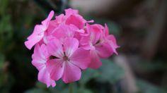 Flower by Halil Şafak on 500px