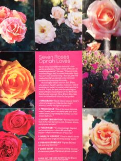 Spring 2008 O' At Home an Oprah Magazine - An Exclusive First Look At Oprah's Retreat. Seven Roses Oprah Loves - 1) Brass Band, 2) French Lace, 3) Sunset Celebration, 4) Yves Piaget, 5) Marilyn Monroe, 6) Francois Rabelais, 7) Chris Evert