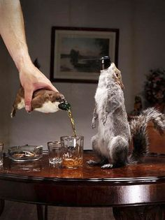 Disturbing ~ Beer packaged inside dead animals. BrewDog's The End of History beer contains 55% of alcohol and each bottle is presented in a stuffed stoat or grey squirrel. Unique packaging was created by a taxidermist and all the animals used were road kill. Lovely.