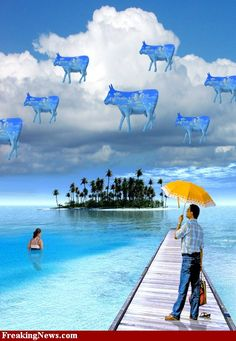 Man Looking at Blue Cows in the Sky