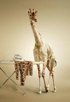 Ironing giraffe! Lololololol