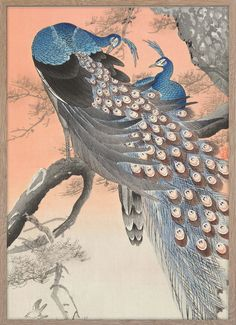 Two peacocks on tree branch – Paper Ministry