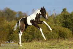 Equine Photography - Karolina Wengerek Foaling season is comming !