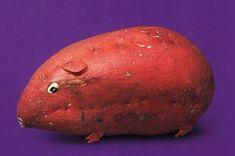 Sweet potato hamster