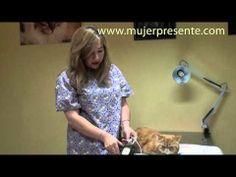 Gatos con la Dra. Lina Sanz, La elección del veterinario para mi gato - YouTube