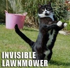 18 Hilarious Pictures of Cats with Invisible Things