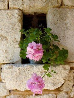 Place Them Everywhere / Pink Geranium Window Boxes, Window Sill, Pretty In Pink, Beautiful Flowers, Beautiful Things, Pink Geranium, Purple Home, Pink Garden, Belle Photo
