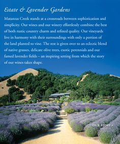 Matanzas Creek in Sonoma, CA has the most beautiful lavender gardens along with a wonderfully,crisp Sauvignon Blanc