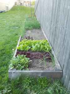 vegetable garden - I think I need to build up the sides for my garden bed next year. At least I have 9 months to improve the soil now!