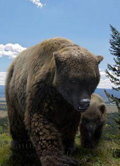 A European cave bear and its cub