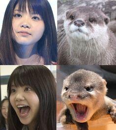 like otter girl. (いきものがかり)