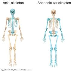 Full Appendicular Skeleton Study Video - YouTube