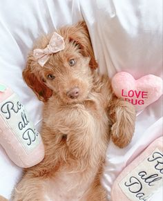 The Deluxe Pup | Valentines day dog toys | cute dog toys | heart dog toys Cute Dog Toys, Cute Dogs, Valentines Day Dog, Dog Accessories, Dog Photos, Hand Stitching, Teddy Bear, Puppies, Photoshoot