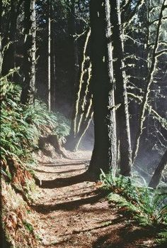 There is a trail in southern Oregon just waiting for you...