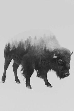 The Bison in B&W Art Print by Andreas Lie | iCanvas Bison Tattoo, Cow Tattoo, Buffalo S, Buffalo Animal, Body Art Tattoos, Sleeve Tattoos, Buffalo Tattoo, Bison Print, Drawing Scenery