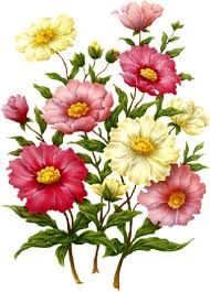 Znalezione obrazy dla zapytania kwiaty